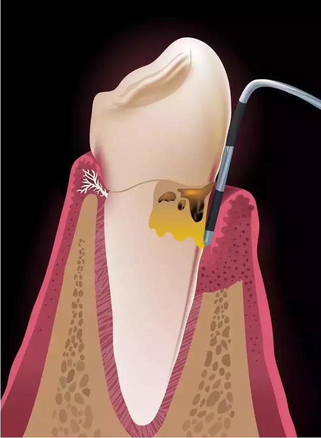 小白象牙科